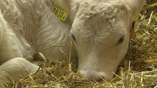 Bauern wollen ihre Tiere schützen