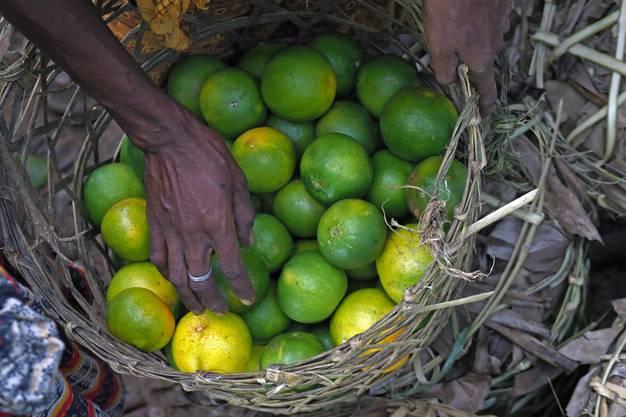Frische Orangen werden angeboten
