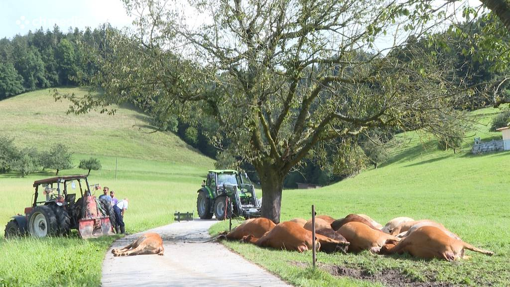 Bowil BE: Blitzeinschlag tötet 20 Kühe und Kälber