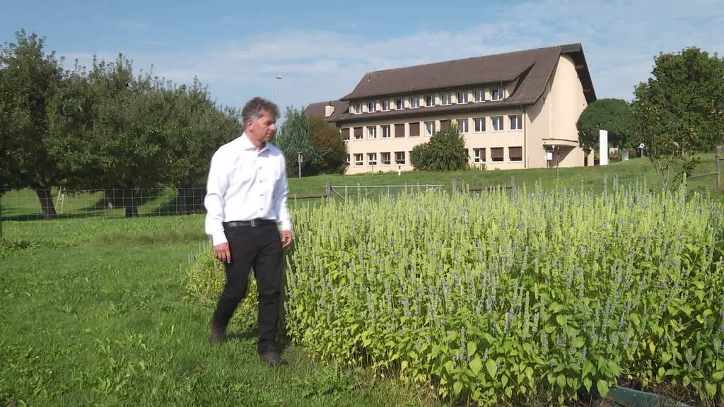 Exotische Pflanze: Christoph Gämperli macht Chia in Flawil