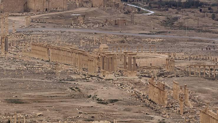 Die Terrormiliz Islamischer Staat (IS) hat wieder die Kontrolle über die syrische Wüstenstadt Palmyra übernommen. Die Truppen von Staatschef Baschar al-Assad hätten sich zurückgezogen, berichtete die Syrische Beobachtungsstelle für Menschenrechte. (Bild vom April 2016)