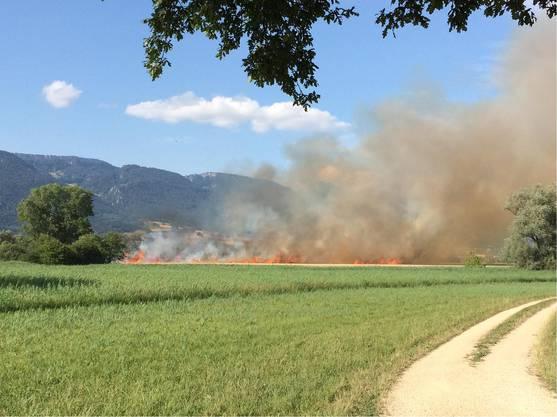 Gemäss ersten Erkenntnissen war das Feuer bei Drescharbeiten auf dem Feld ausgebrochen und hat sich aufgrund der grossen Trockenheit und des Windes sehr rasch ausgebreitet.