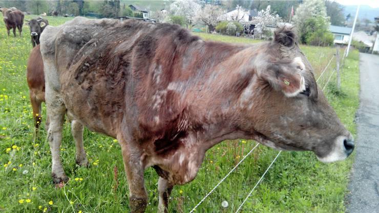 17 von 26 Tieren starben auf eine schlimme Art und Weise.