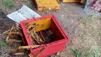Geplünderter Bienenstock - der Bär verschwand ungesehen (Archiv)