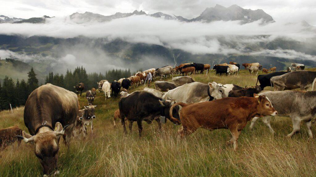 Nationalratskommission gegen schärfere Regeln für Nutztierhaltung