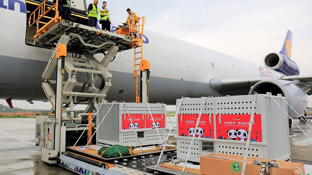 Das Boxen mit den beiden Pandas für den Berliner Zoo werden in Chengdu ins Flugzeug verladen.