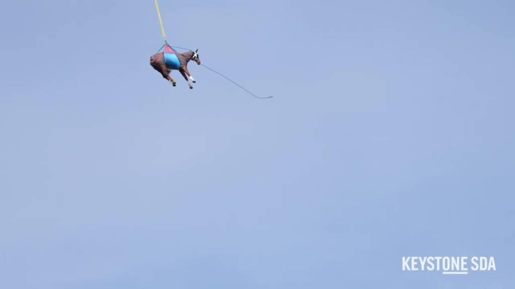 Pferde fliegen per Hubschrauber über die jurassischen FreibergeIm
