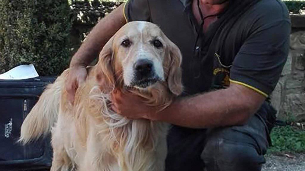 Neun Tage lang harrte Hund Romeo unter den Trümmern seines Zuhauses aus, bis er gefunden wurde.
