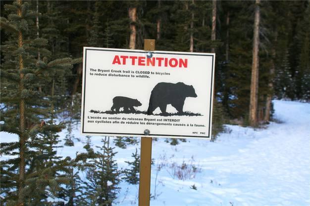 In dieser Jahreszeit sind die Bären keine Gefahr: Sie halten Winterruhe.
