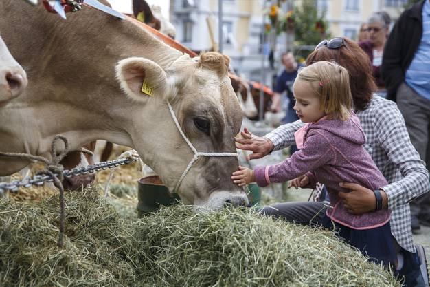 Auf dem Dornacherplatz können jeweils Kühe angeschaut und auch gestreichelt werden