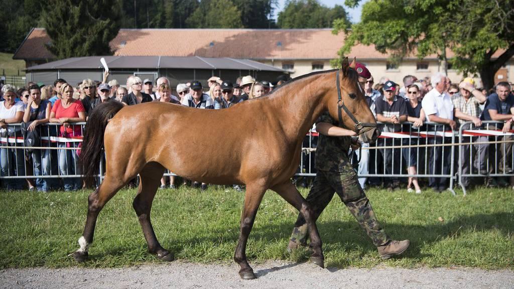 Im September wurden in Schönbühl die Pferde vom mutmasslichen Pferdequäler aus Hefenhofen versteigert. (Archiv)