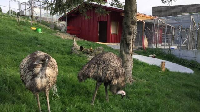 «Es war ein riesiger Lupf»: Gnadenhof baut Tieren neues zu Hause