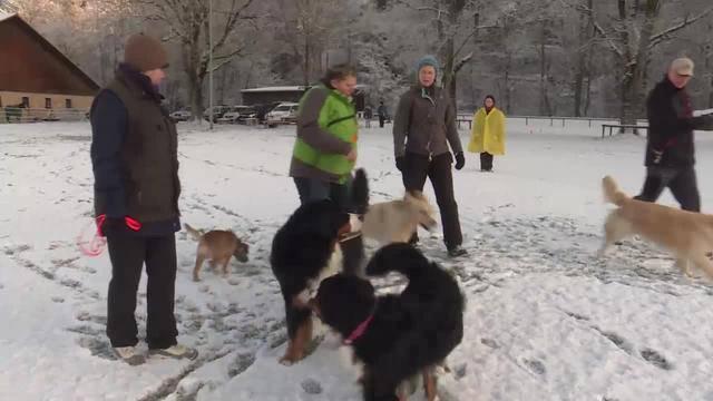 Artgerechte Beschäftigung für Hütehunde — Freiwillige Ausbildung für Hundehalter