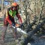 Beat Schmid von der Gartenbaufirma Agroservice ist für die Fällung der Bäume zuständig. Er zersägt die Stämme, damit sie abtransportiert werden können.