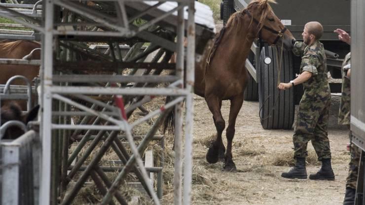 Am 8. August 2017 wurde der Betrieb des Pferdezüchters in Hefenhofen TG geräumt. (Archiv)