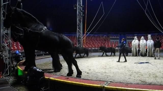 Franziska Nock probt mit ihren Pferden.