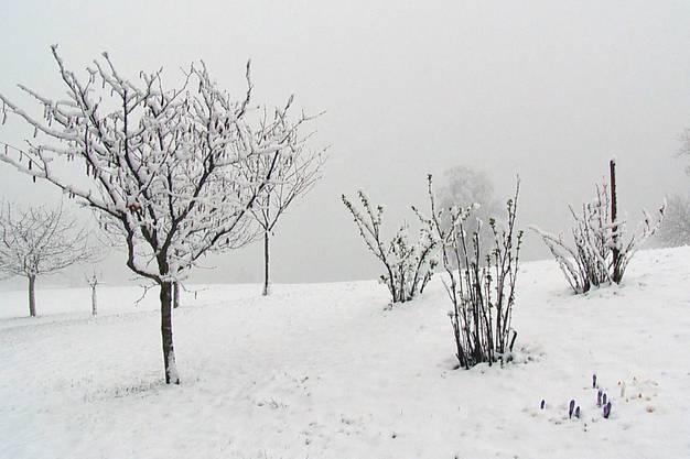 Der Winter hat die Schweiz (hier das Turbenthal) vorübergehend wieder im Griff.