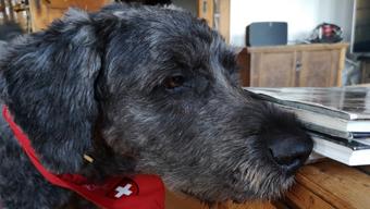 Hunde werden darauf trainiert, Bettwanzen zu suchen und zu finden – in Privaträumen wie auch in Militärunterkünften.