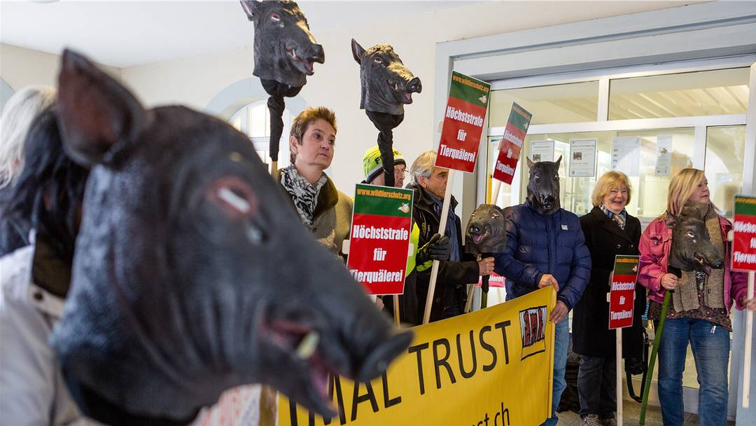 Mit Wildschweinköpfen, Plakaten und «Blut»-Spritzern: Tierschützer demonstrieren in Bad Zurzach.