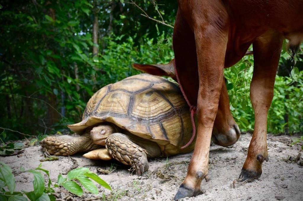 Tierfreunde Leonardo und Simon