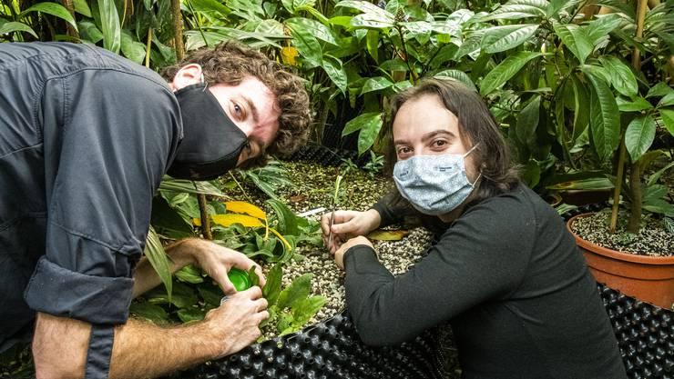 Auf der Suche nach Kleingetier: José Gilgado (rechts) mit seinem Assistenten Ian Bobbitt (links) im Botanischen Garten Basel.
