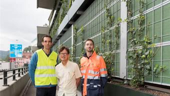Grün statt grau: Pionierprojekt am Schlossberg
