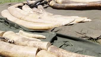 Beschlagnahmtes Elfenbein (Symbolbild)