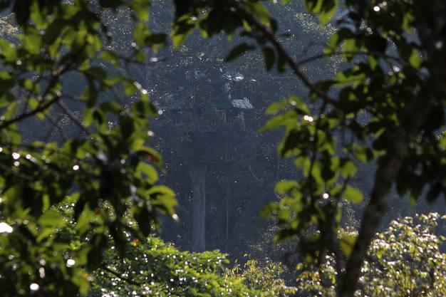 Das eigentliche Highlight bei der sogenannten 'Gibbon Experience' ist die Übernachtung im Baumhaus mitten im Dschungel von Laos.