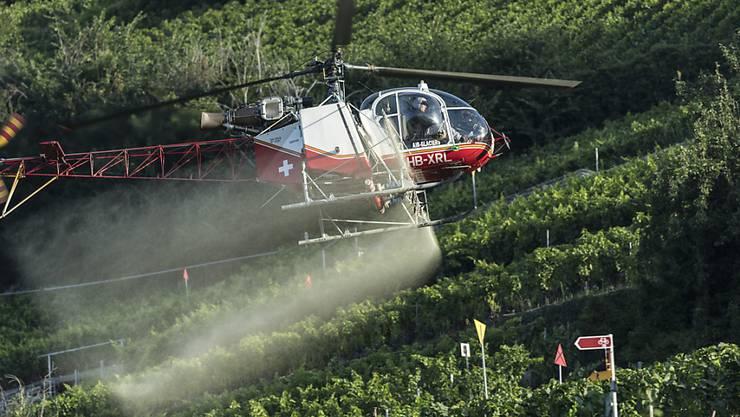 Pestizide mit den Wirkstoffen Chlorpyrifos und Chlorpyrifos-methyl sollen künftig in der Landwirtschaft nicht mehr verwendet werden dürfen. (Archivbild)