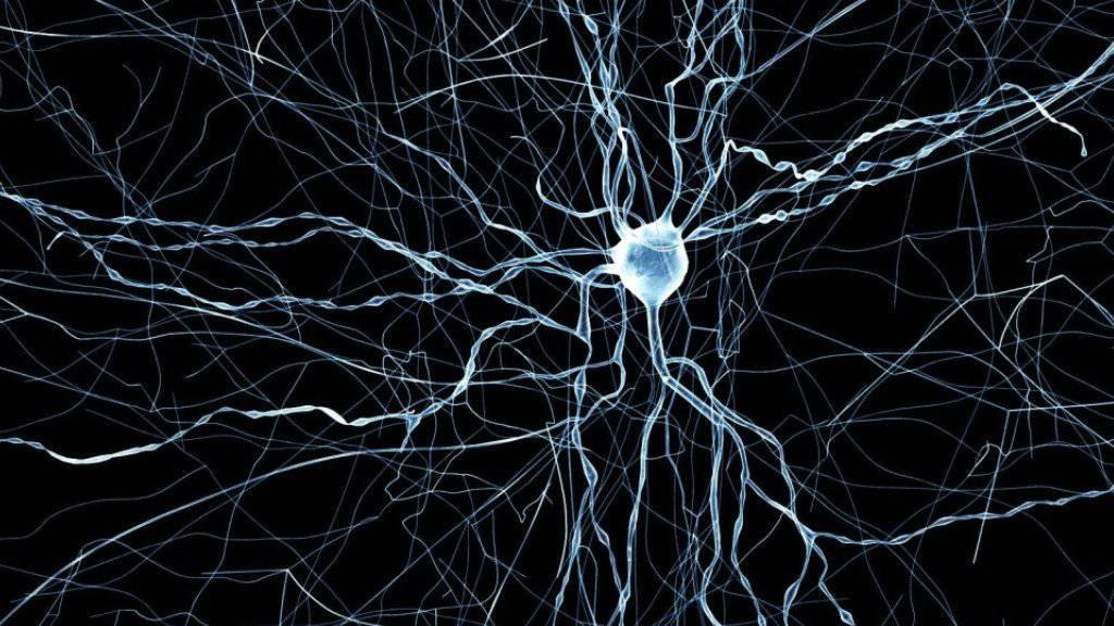"""Mit Methoden des """"Blue Brain Projects"""" ist es gelungen, extrem realistische Simulationen von Mäuse-Nervenzellen zu erzeugen."""