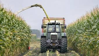Die Schweizer Landwirtschaft soll sich stärker am Markt orientieren. (Themenbild)