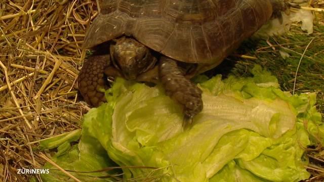 Sind bald 150 Schildkröten obdachlos?