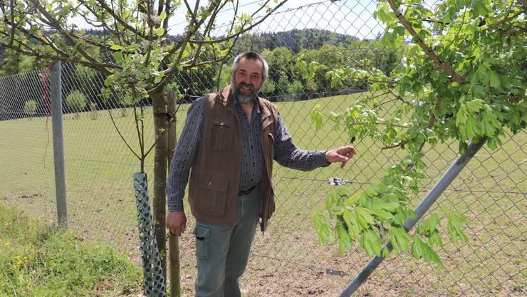 Mooshof Wettingen: Unbekannte haben ein Loch in den Zaun von Pius (Foto) und Walter Benz geschnitten.