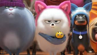 """Der Animationsfilm """"The Secret Life Of Pets 2"""" hat sich am Wochenende vom 27. bis 30. Juni 2019 den ersten Platz in den Deutschschweizer Kinocharts gesichert. (Archiv)"""