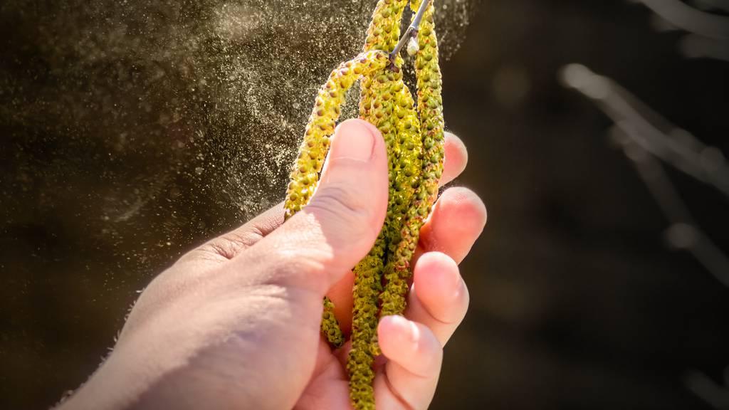 Wind und Sahara-Staub sorgen für Allergiker-Albtraum