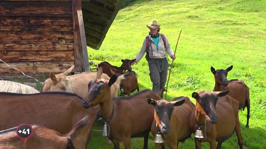 Martina Haller hütet 70 Ziegen hoch über Grindelwald