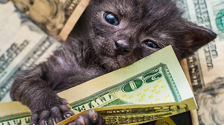 Diese Kätzchen haben sicherlich keine Geldnot. Und auch nicht zu wenig Selbstbewusstsein.