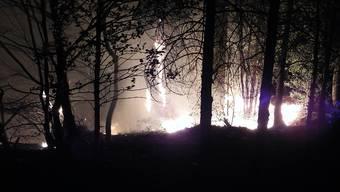 Bei einem Waldbrand im Torlauizug in Gersau waren Feuerwehrleute die ganze Nacht im Einsatz.