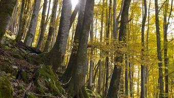 «Naturerfahrung ist für die seelische, körperliche und geistige Entwicklung des Menschen von zentraler Bedeutung», teilt der Verein Wald- und Umweltschule mit. (Symbolbild)