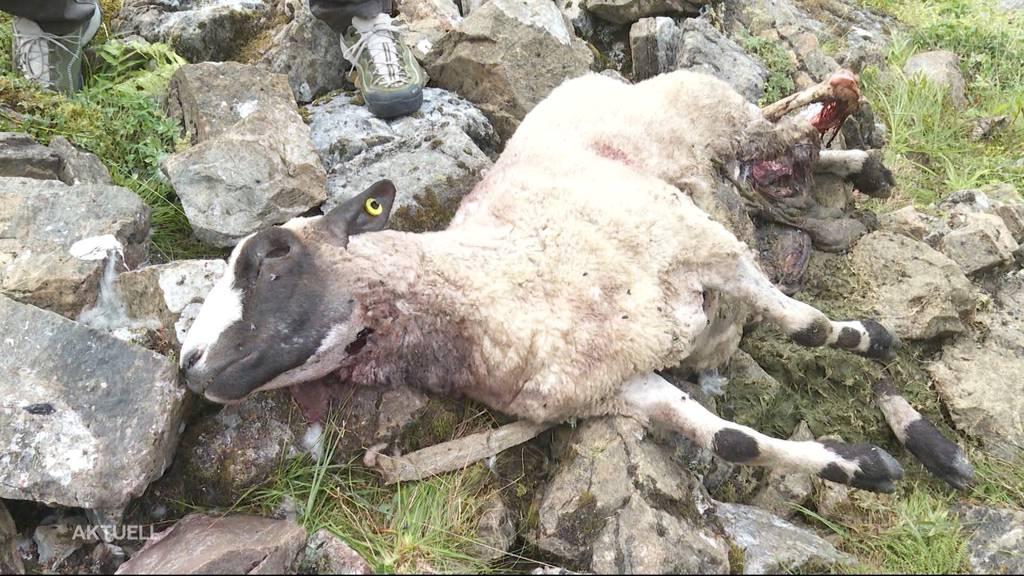 Enge Angelegenheit: Jagdgesetz mit rund 52% der Stimmen nicht angenommen