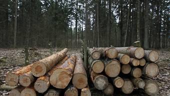 Baumstämme gefällter Bäume im geschützten Urwald Białowieża (Archiv)