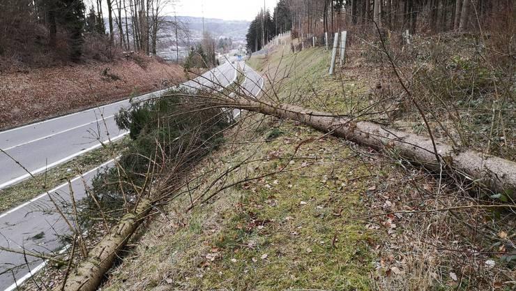 Umgestürzte Bäume: Zwischen Wohlen und Bremgarten war der Radweg am Montagmorgen geschlossen.
