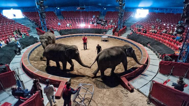 Öffentliche Tierprobe beim Circus Knie