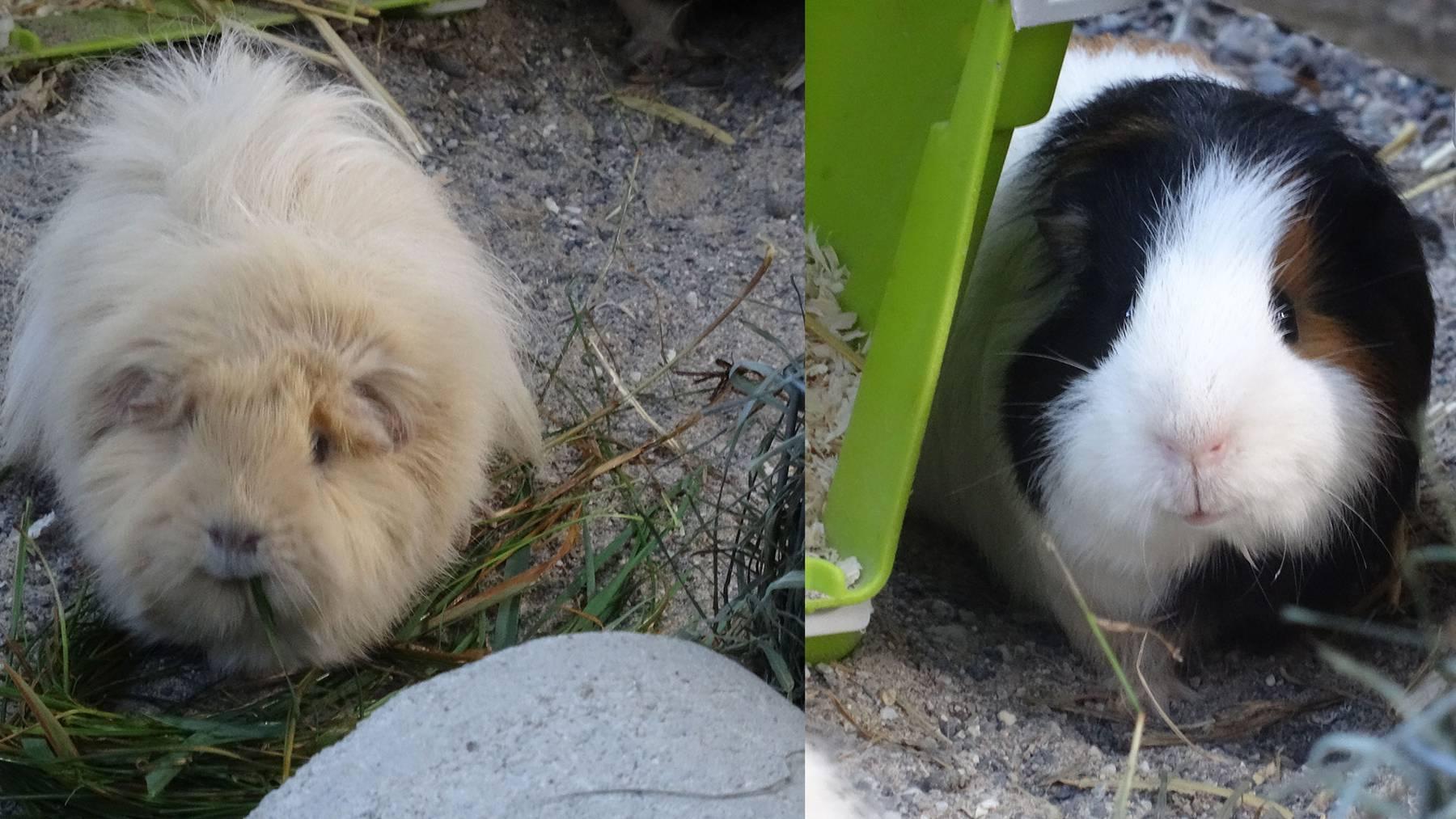 Elli und Fambo