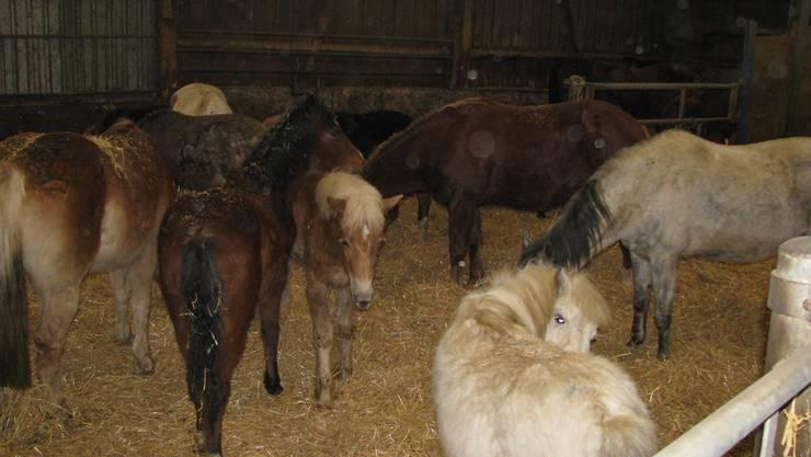 Im Jura deponiert: Der Gränicher kümmert sich nicht mehr um seine 33 Pferde.