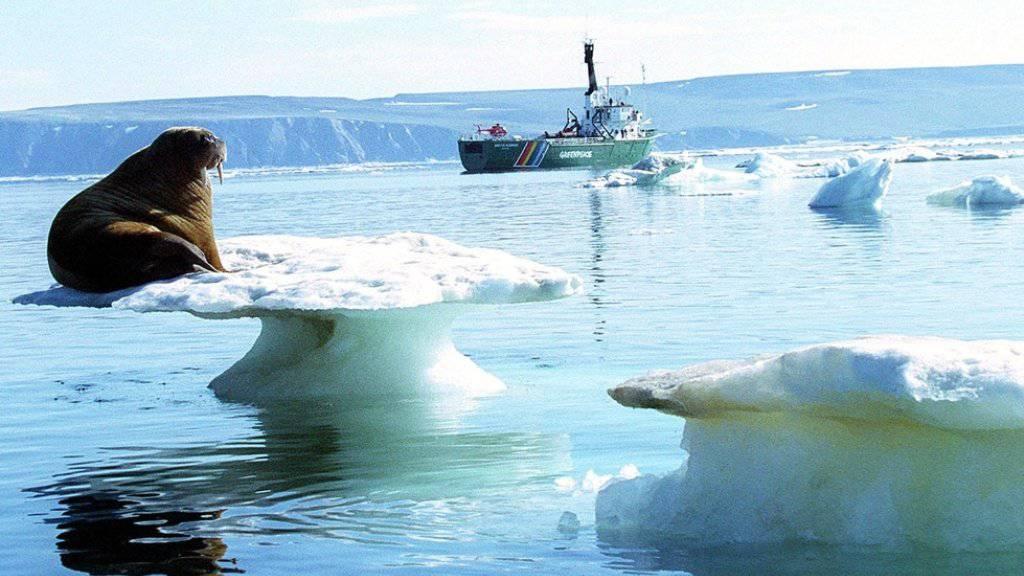 Ein Walross auf schmelzendem Eis in der Arktis - die US-amerikanische Ozean- und Klimabehörde NOAA schlägt angesichts der Erwärmung der Arktis Alarm. (Archivbild)