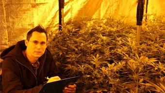 Stevens Senn möchte die Bevölkerung über die verschiedenen Seiten der Hanf-Pflanze aufklären. dka/archiv