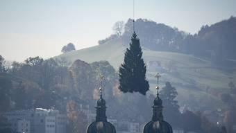 Ein Helikopter hat den diesjährigen Weihnachtsbaum am vergangenen Freitag von Mörschwil auf den Klosterplatz St. Gallen geflogen. In der Schweiz stammen rund 400'000 bis 500'000 der verkauften 1,2 Millionen Weihnachtsbäume aus einheimischer Produktion. (KEYSTONE/Benjamin Manser)