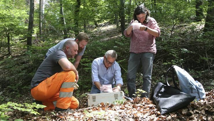 Die Experten Markus Peter (Mitte) und Rahel Ackermann untersuchen die Münzen vor Ort. (zvg / Archäologie Baselland/Suzan Afflerbach)