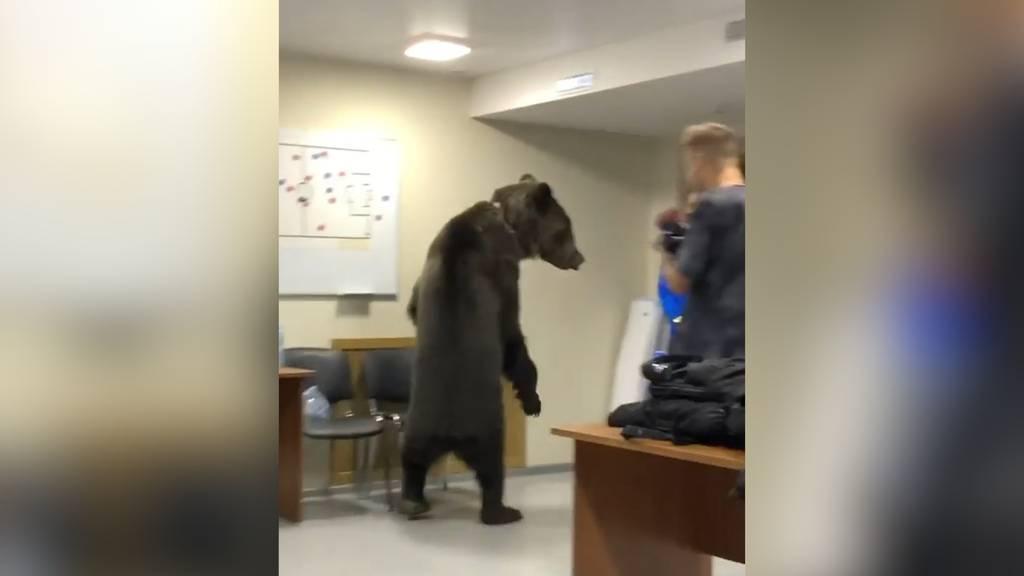Schock in Russland: Und plötzlich steht ein Bär in der Spielerkabine!